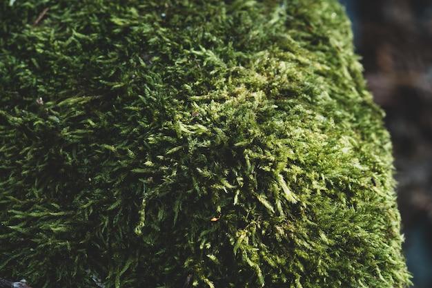 Снимок крупным планом зеленой лужайки с размытым фоном