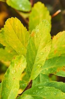 露に覆われた緑の植物のクローズアップショット