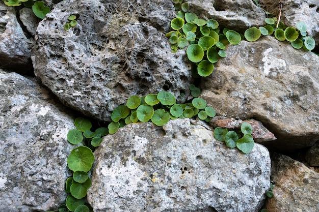 큰 바위 사이에서 성장하는 녹색 식물의 근접 촬영 샷