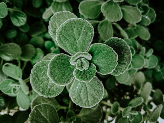 Снимок крупным планом зеленых растений в саду, покрытом каплями росы