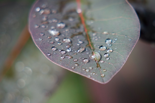 露に覆われた葉のクローズアップショット