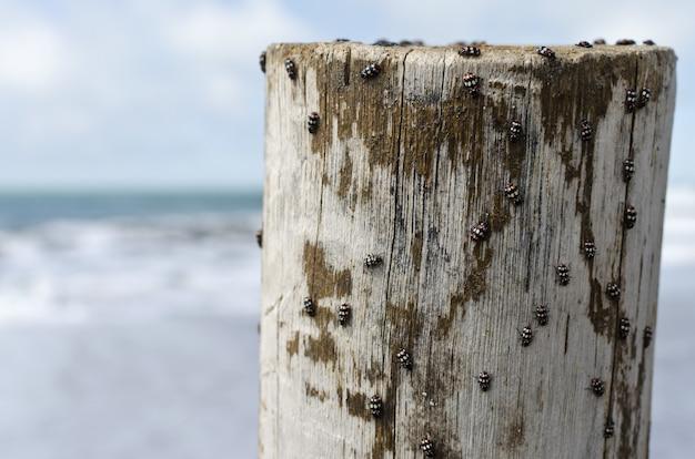 Снимок крупным планом многих жуков на старом стволе дерева на пляже