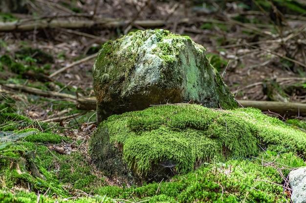 森の中の苔むした岩のクローズアップショット