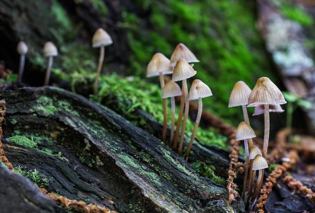 Снимок крупным планом грибов, растущих в лесу