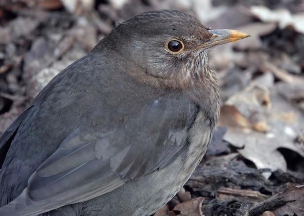 오래 된 세계 flycatchers의 근접 촬영 샷