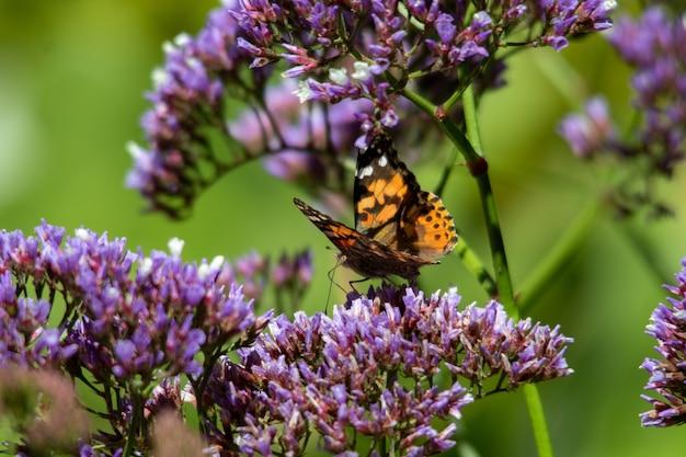 파란색과 보라색 꽃에 앉아 주황색과 검은 색 나비의 근접 촬영 샷