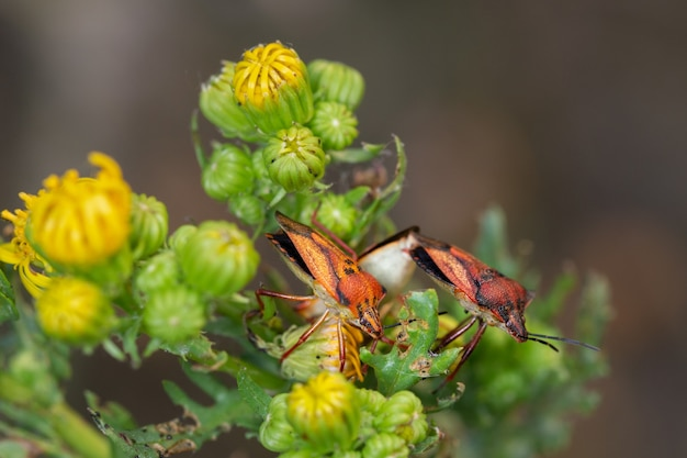 Крупным планом выстрел оранжевых клопов на зеленых растениях