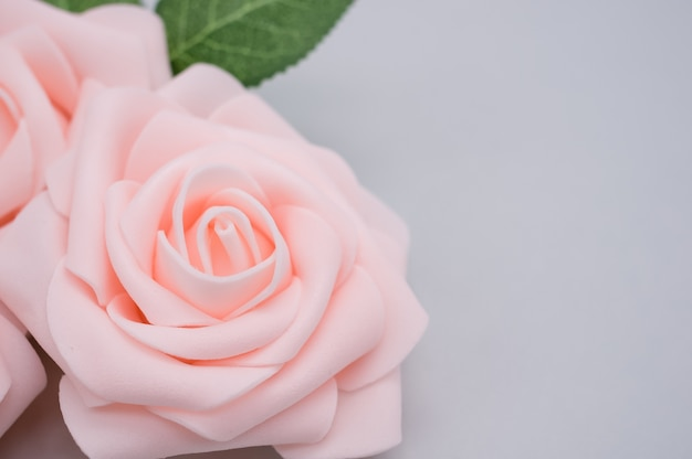 Крупным планом выстрел из розовых роз, изолированные на синем фоне с копией пространства