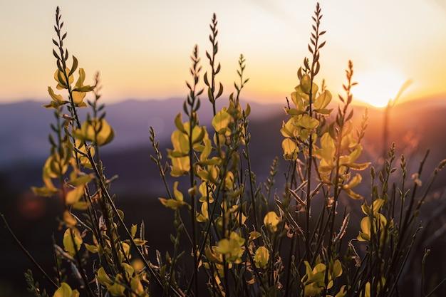 따뜻한 일몰 빛이 있는 녹색 잎이 있는 식물의 근접 촬영