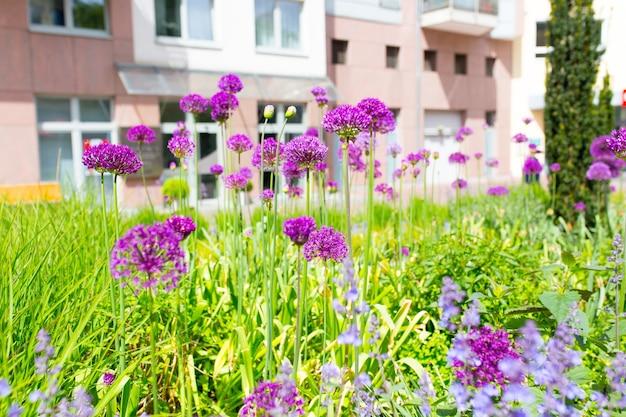 庭の紫色の花と草のクローズアップショット