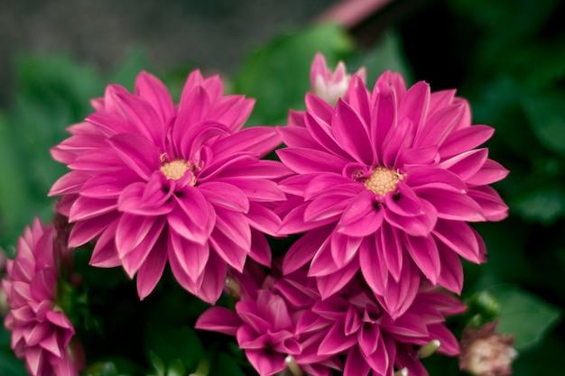 緑の背景で隣り合う紫色の花のクローズアップショット