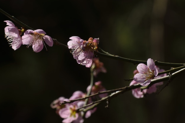 나뭇 가지에 보라색 꽃의 근접 촬영 샷