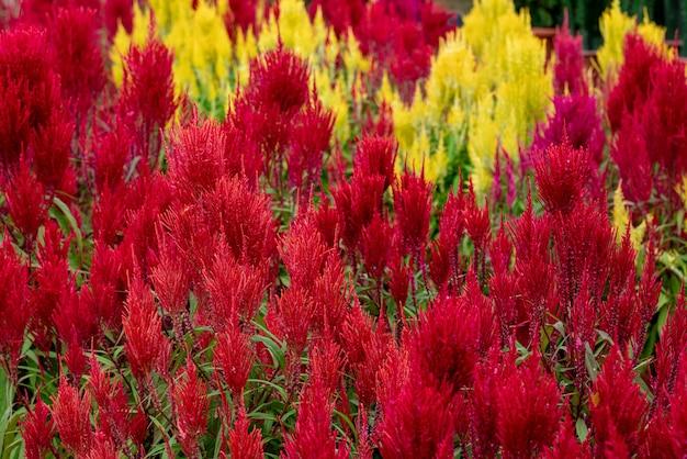 緑の葉と赤と黄色の花のクローズアップショット