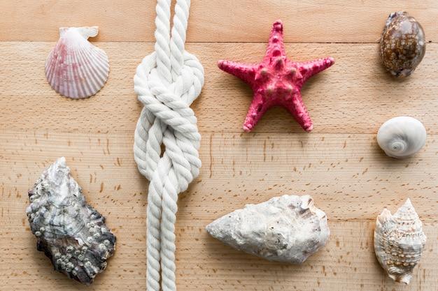 木の板の上に横たわっている貝殻、ヒトデ、海の結び目のクローズアップショット