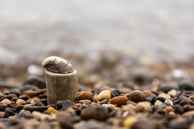 砂利に囲まれた岩の上のカタツムリのクローズアップショット