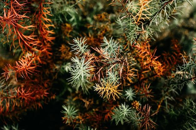 다채로운 식물의 근접 촬영 샷