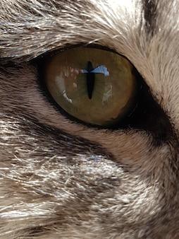 白い毛皮を持つ動物の目のクローズアップショット