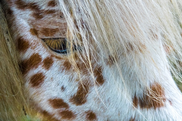 Крупным планом лицо белой лошади с коричневыми точками