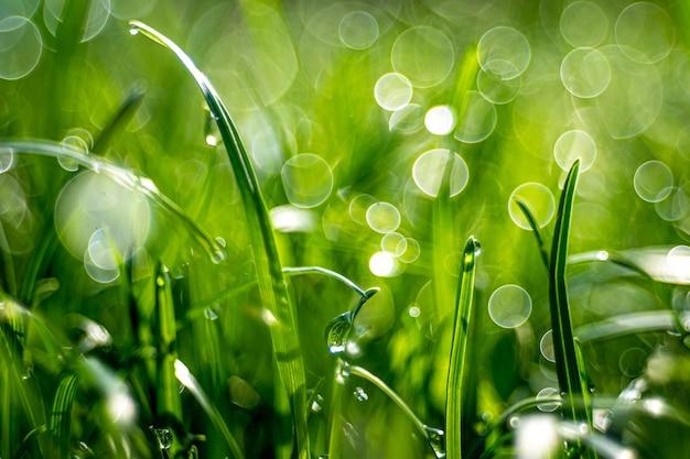 흐릿한 배경과 나뭇잎 효과가있는 필드에서 잔디의 근접 촬영 샷
