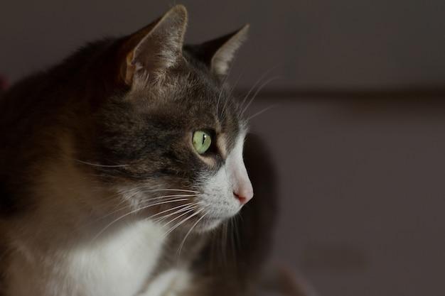 녹색 눈을 가진 흑인과 백인 고양이의 머리의 근접 촬영 샷