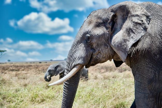 荒野でかわいい象の頭のクローズアップショット