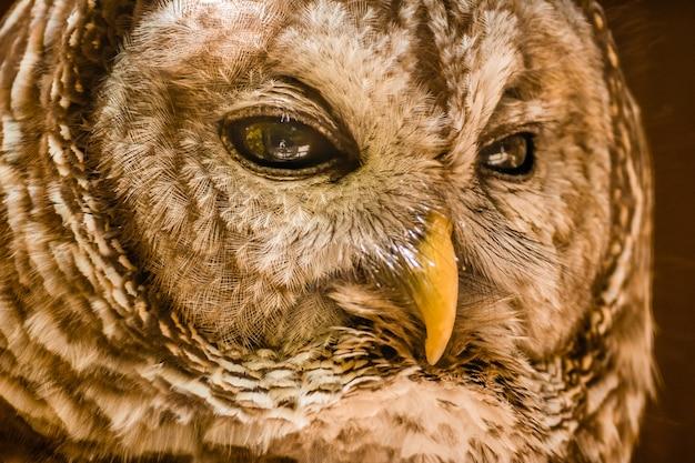 Снимок головы совы крупным планом в дневное время