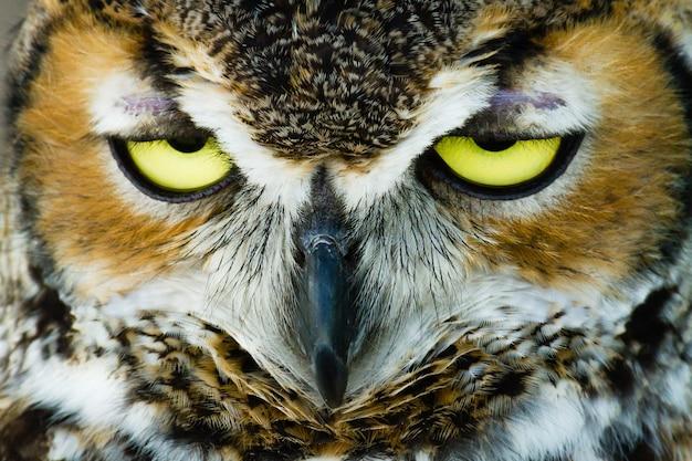 目を半分開いたフクロウの頭のクローズアップショット
