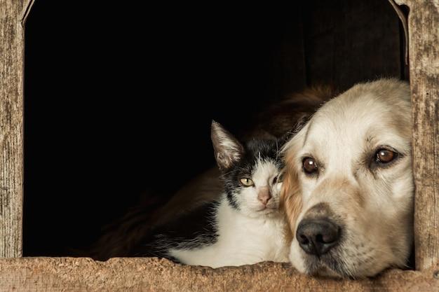 귀여운 강아지의 코와 뺨에 앉아있는 고양이의 근접 촬영 샷