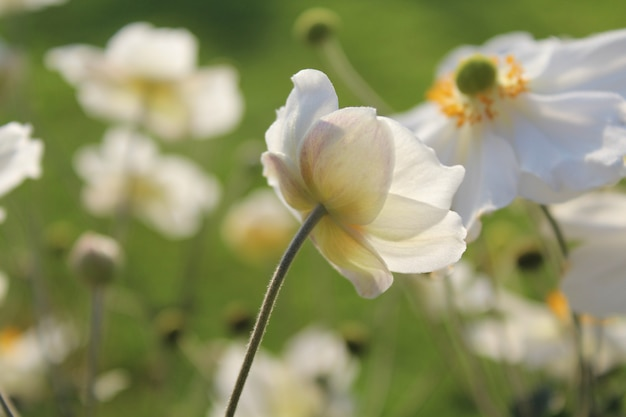 화창한 날에 정원에서 흰 개화 꽃의 근접 촬영 샷