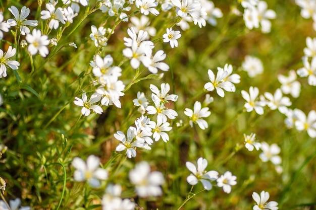 晴れた日の白い花のクローズアップショット