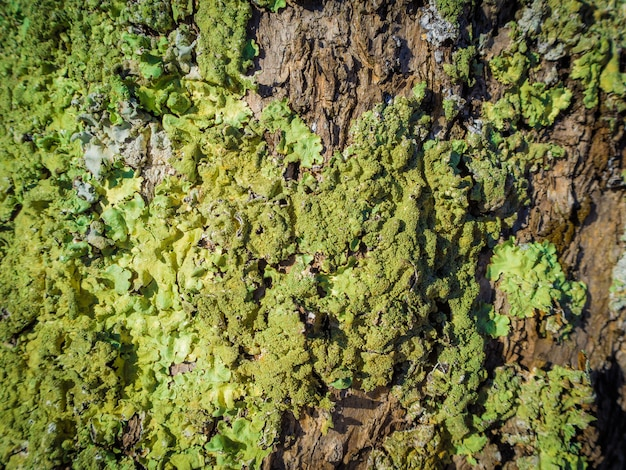 森の苔で覆われた木の樹皮のクローズアップショット