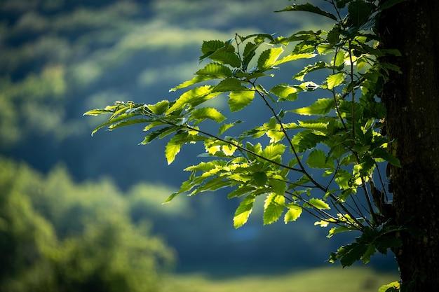 背景に曇り空と緑の葉と木の枝のクローズアップショット