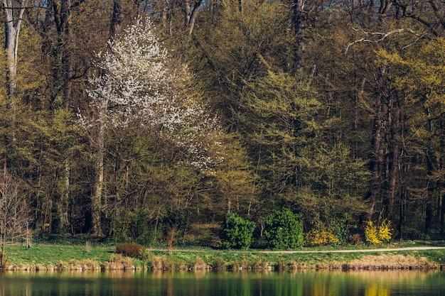春の間にザグレブクロアチアのマクシミール公園の木と湖のクローズアップショット