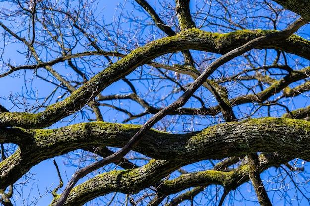 春の間にザグレブクロアチアのマクシミール公園の青い空の下で木のクローズアップショット