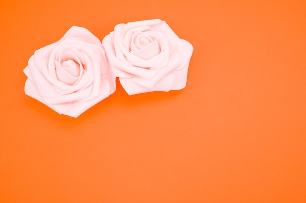 오렌지 배경 복사 공간에 고립 된 두 핑크 장미의 근접 촬영 샷