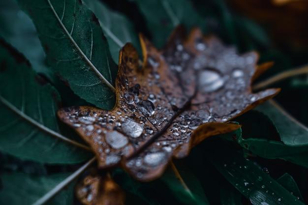 Крупным планом выстрел из капель воды на осенних листьях