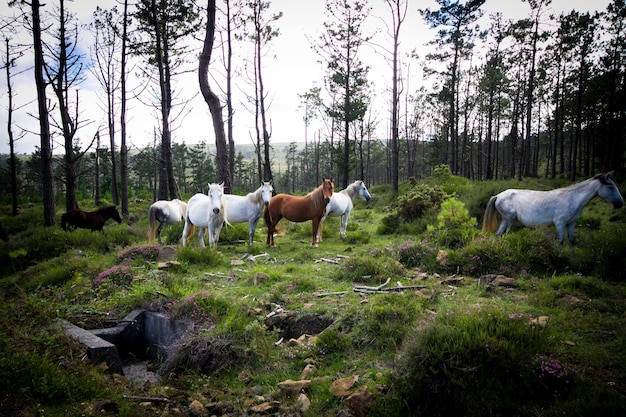 Снимок крупным планом белых и коричневых лошадей в лесу с небольшой густотой деревьев и зеленой травы