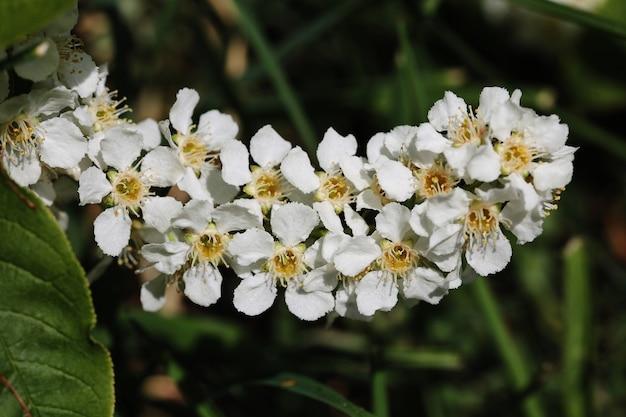 Снимок крупным планом белых цветов на ветвях деревьев