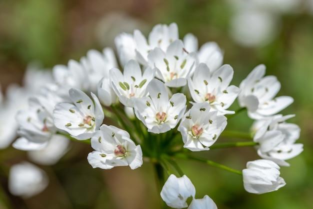 흰 꽃의 근접 촬영 샷