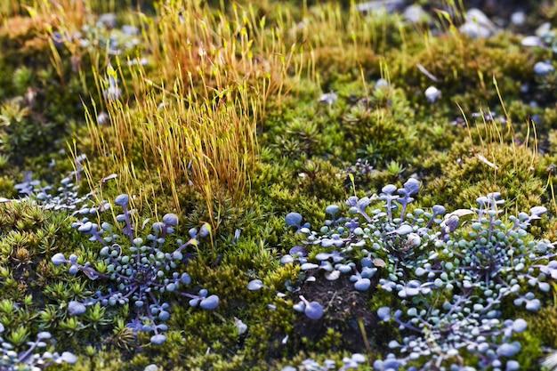 フィールドの野生植物のクローズアップショット