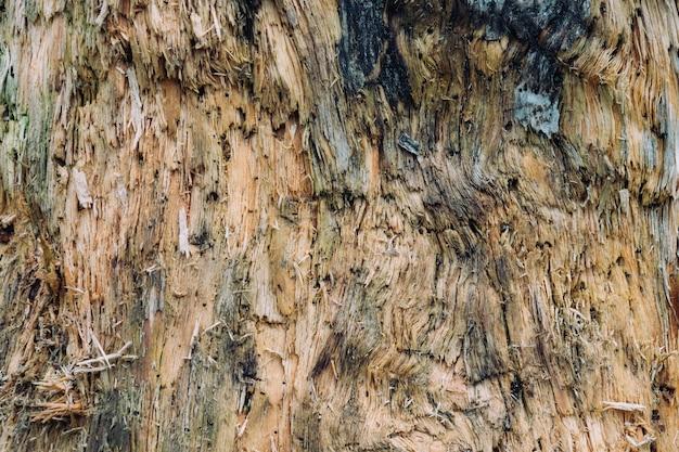 木の木の質感のクローズアップショット