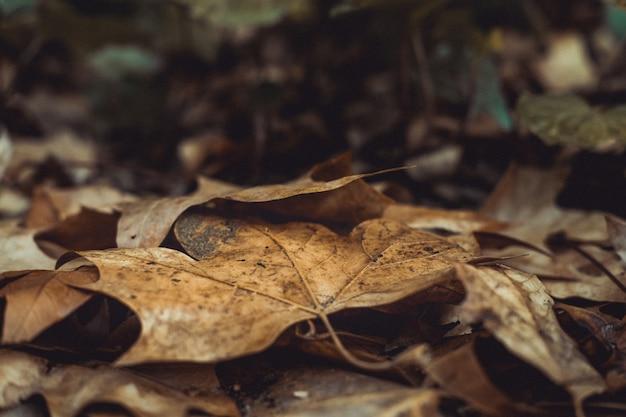 Colpo del primo piano di vecchie foglie secche di autunno che giace a terra in un parco