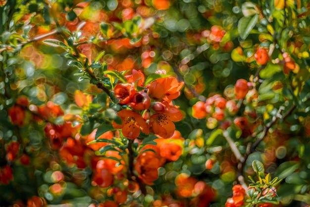 Colpo del primo piano di bei fiori arancioni sotto la luce del sole