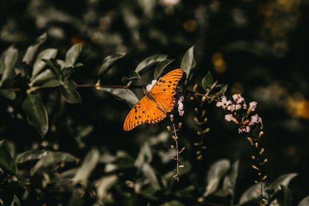 Colpo del primo piano di una farfalla arancione su un fiore