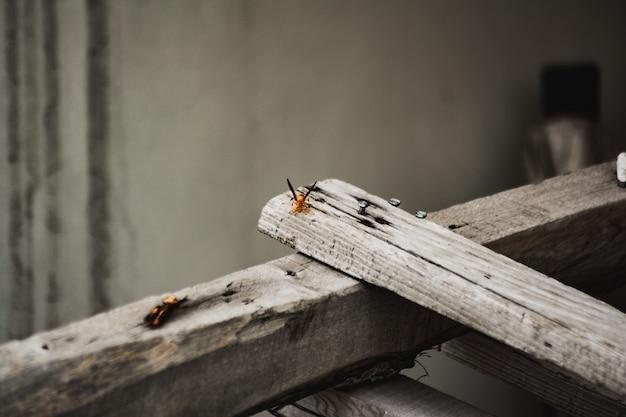Colpo del primo piano di un insetto netto-alato arancio su una plancia di legno grigio