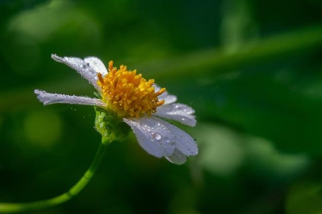 Closeup shot of an oxeye daisy under the sunlight