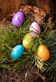 Closeup shot of painted colorful easter eggs on fir tree