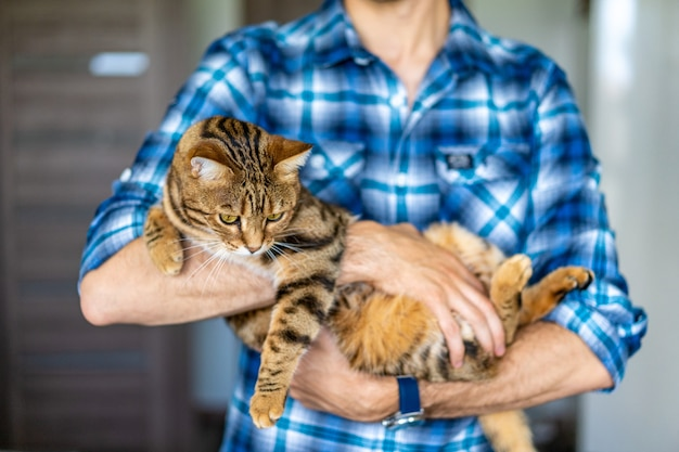 Closeup shot of a person in a blue flannel holding a beautiful bengal cat