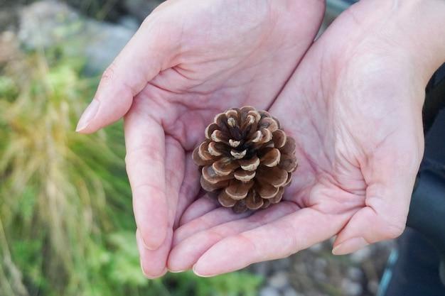 Colpo del primo piano di una pigna nel mezzo di un paio di mani in una foresta in una giornata nuvolosa