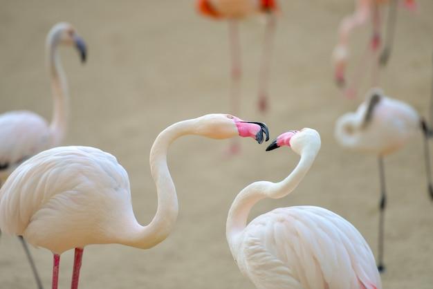 Closeup shot of pink flamingos